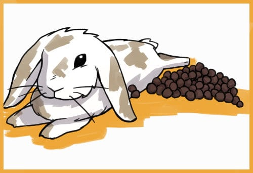 RABBIT WITH A PILE OF POOP