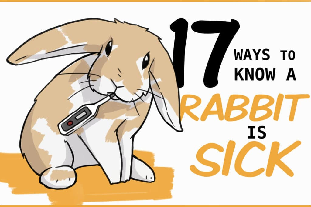 ways to know your rabbit is sick