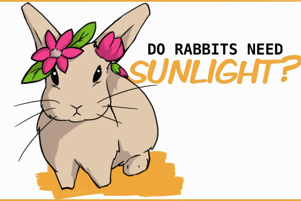 Do rabbits need sunlight?