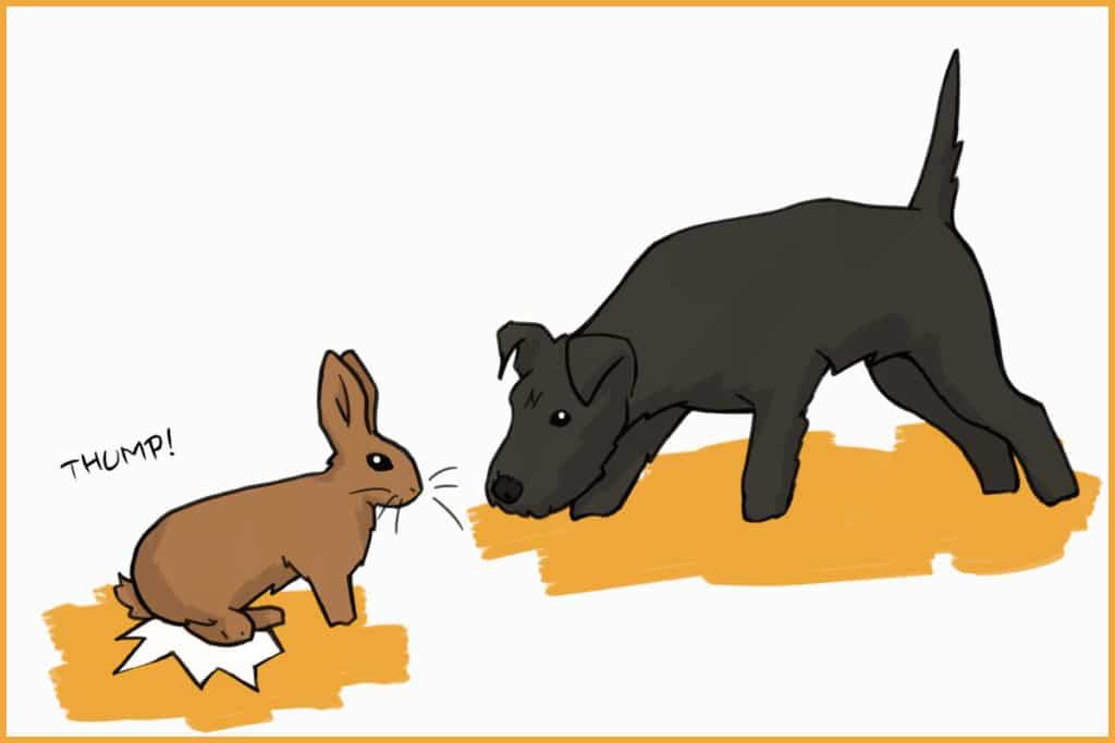 rabbits thumps to warn dog