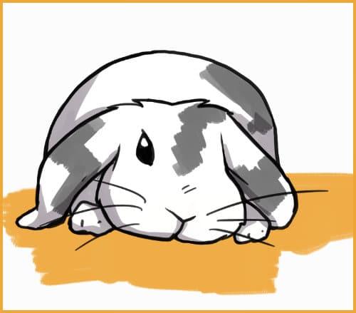 rabbit tired