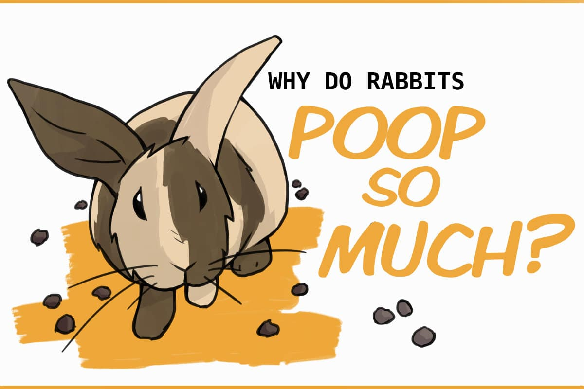 WHY DO RABBITS POOP SO MUCH?