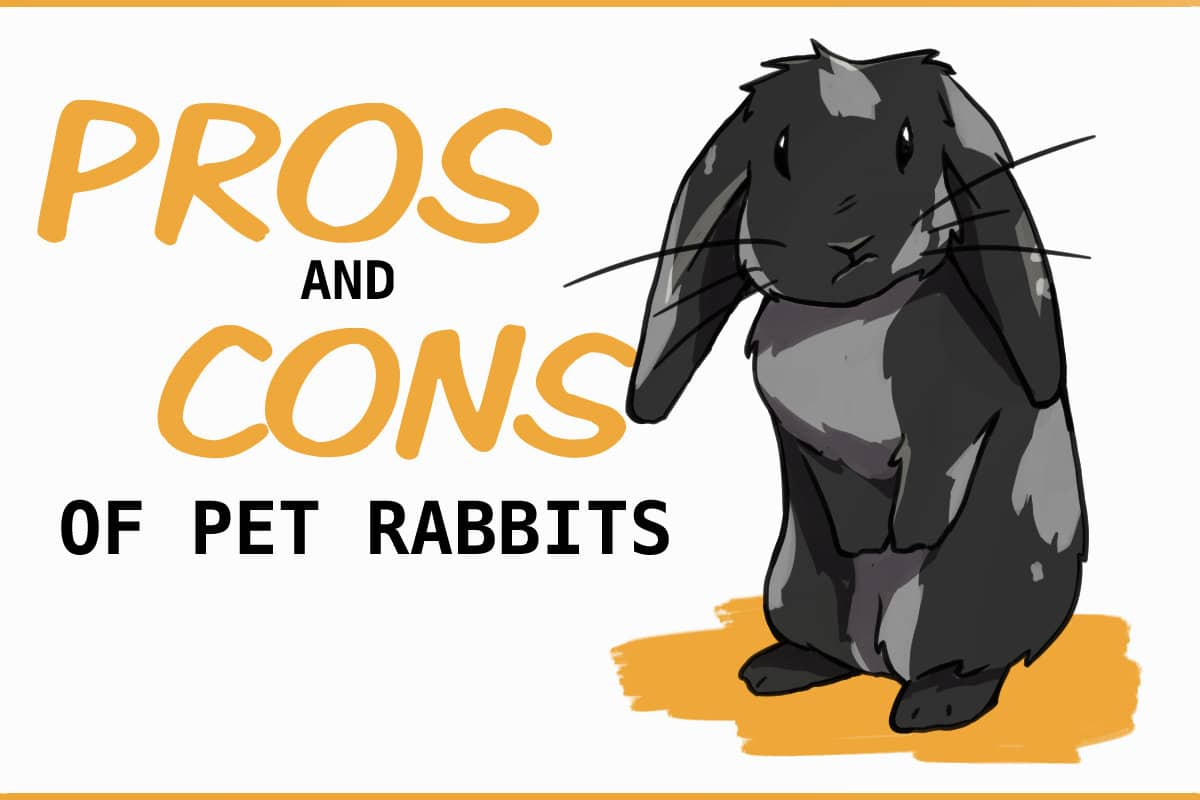 pros and cons of pet rabbits