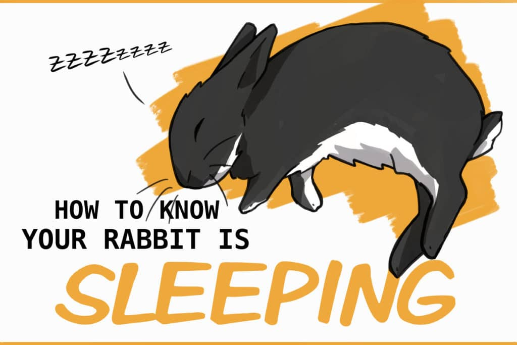 RABBIT SLEEP HABITS