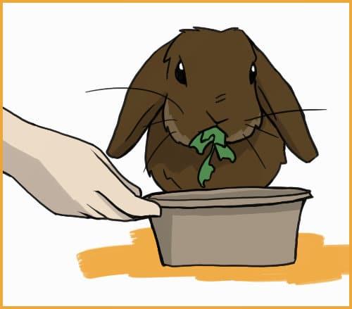 rabbit eat greens