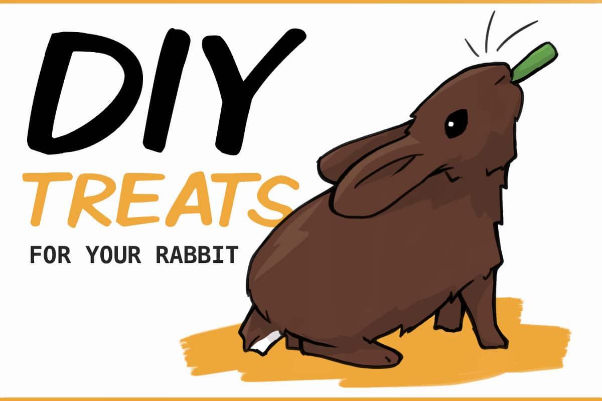 5 DIY treats for your rabbit