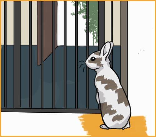 keep rabbits away from open doors