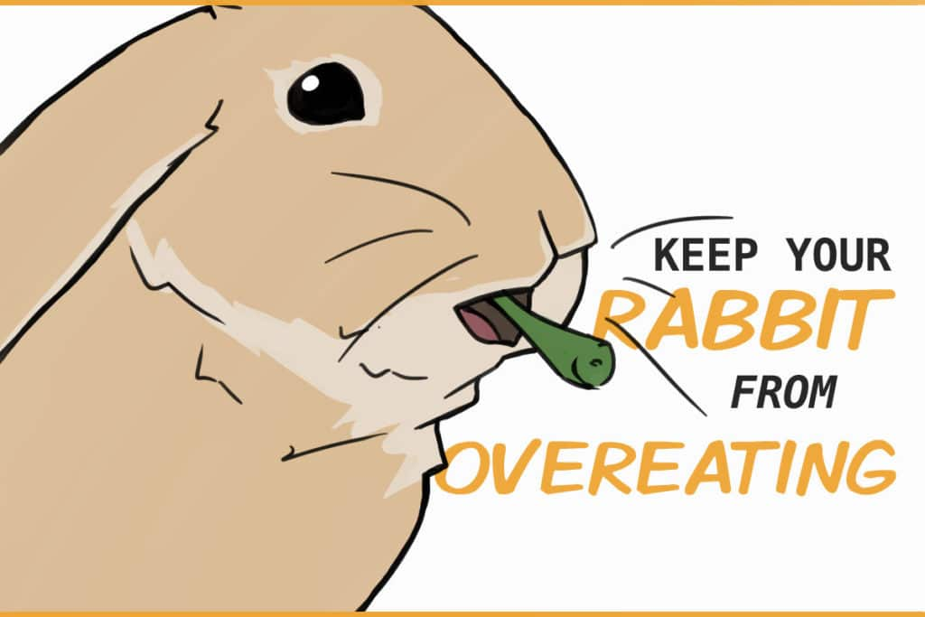keep your rabbit from overeating