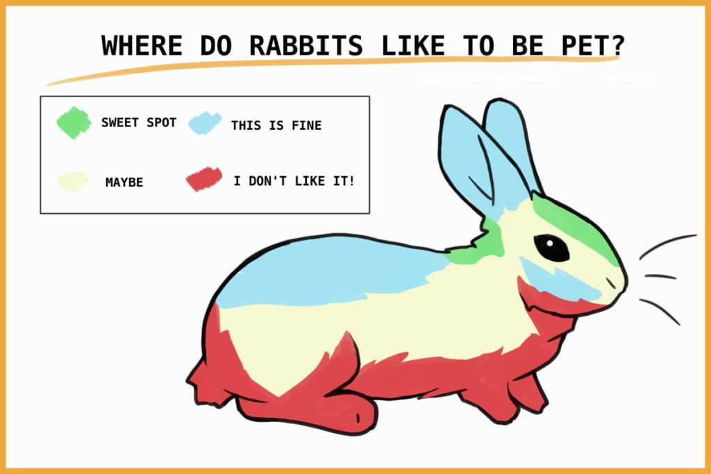 where do rabbits like to be pet