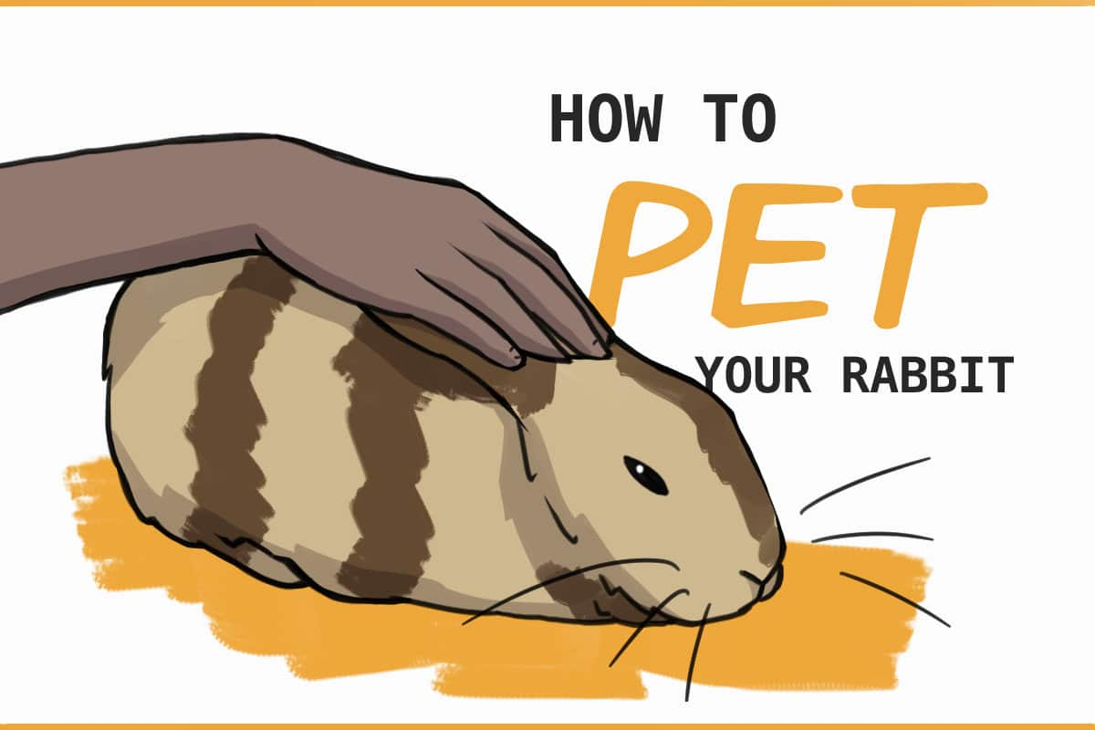 how to pet your rabbit