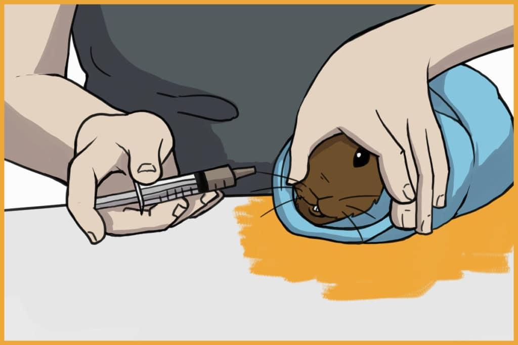 syringe feed a rabbit