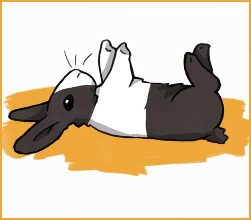 tranced rabbit