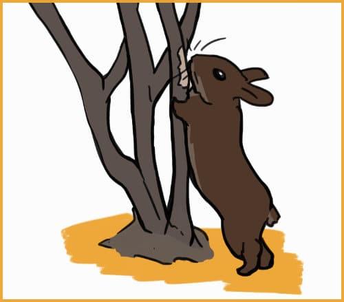 rabbit eating bark