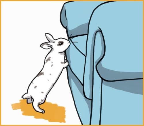 free roam rabbit