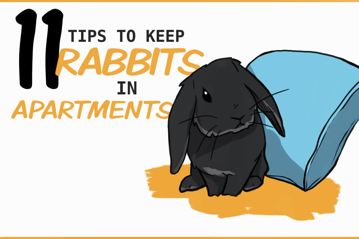 11 Tips To Keep Rabbits In A Small Apartment