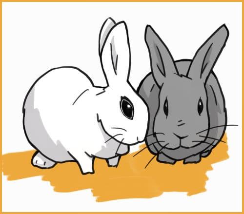 Rabbit bonded pair