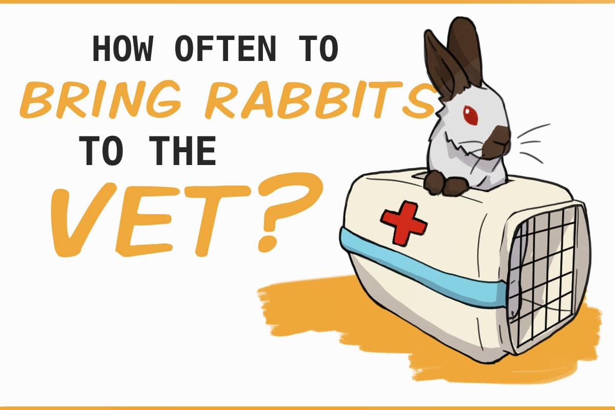 how often to bring rabbits to the vet?