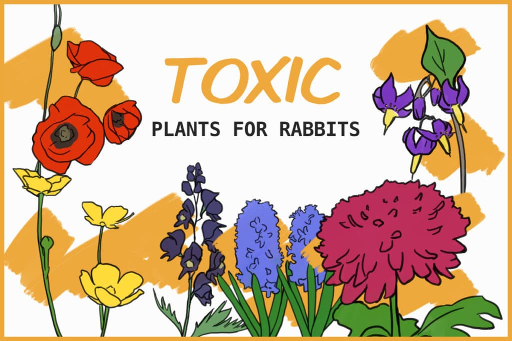 plants that are poisonous for rabbits