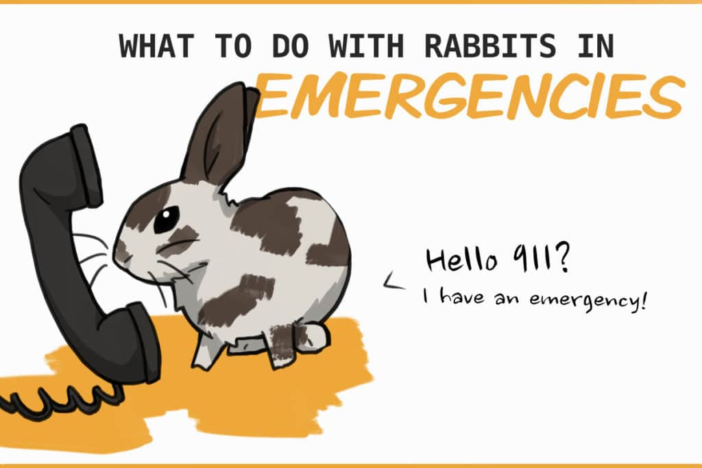 what to do with rabbits in emergencies