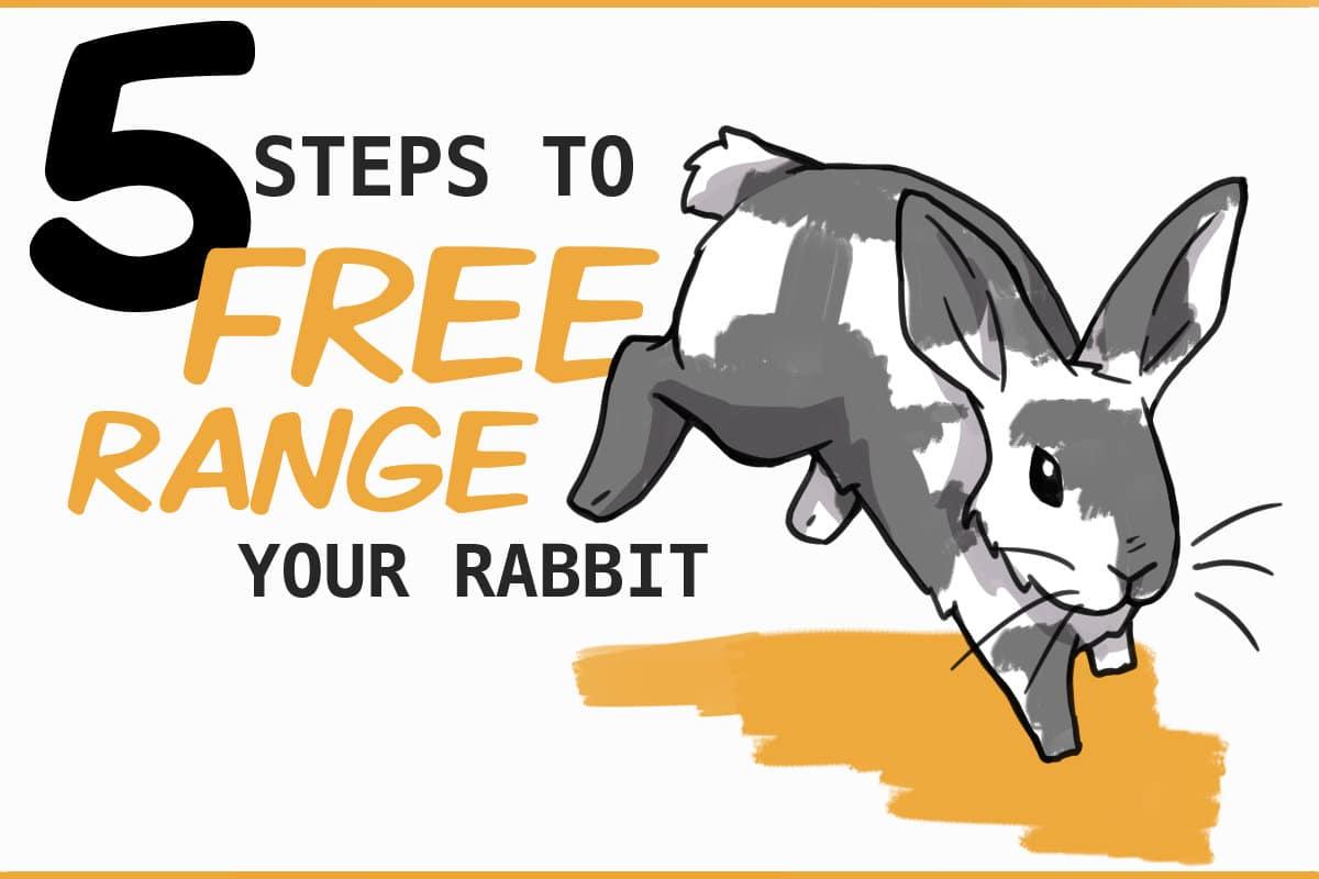 5 steps to free range your rabbit