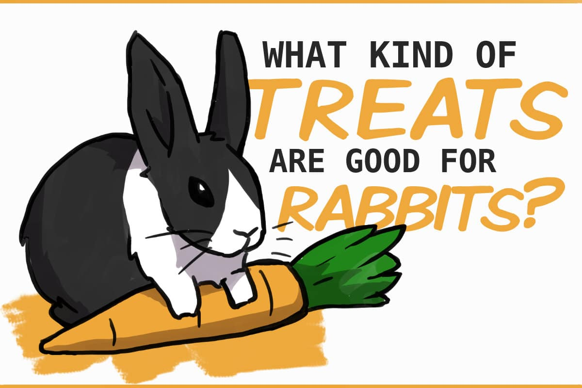 what kind of treats are good for rabbits?
