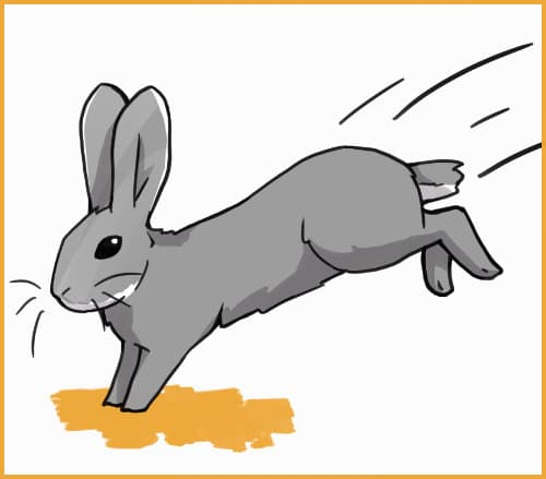 exercising rabbit