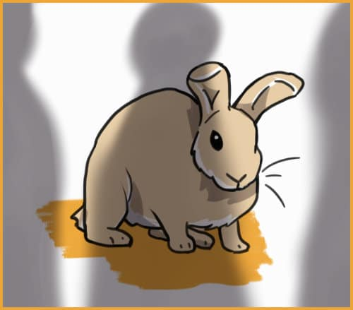 rabbit cowering from shadows