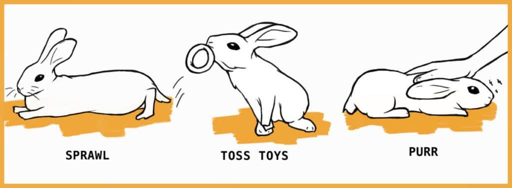 Happy rabbit behaviors