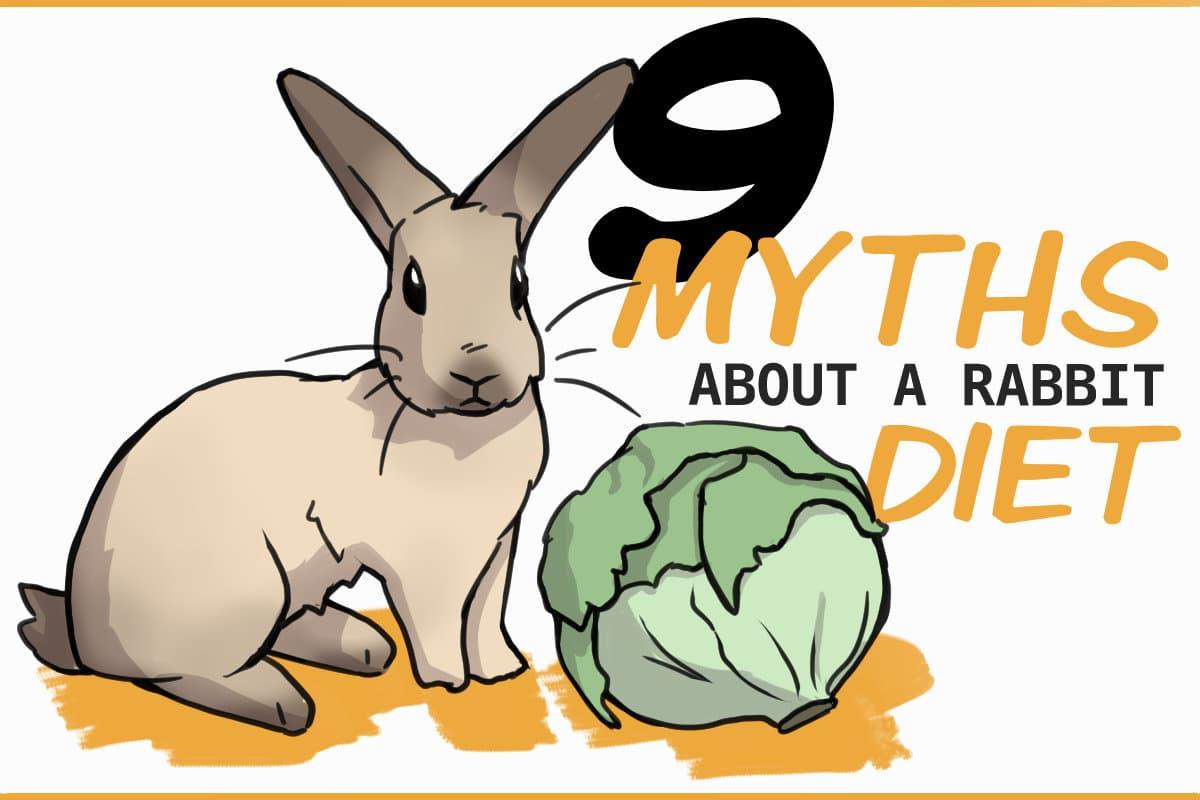 9 myths about a rabbit diet