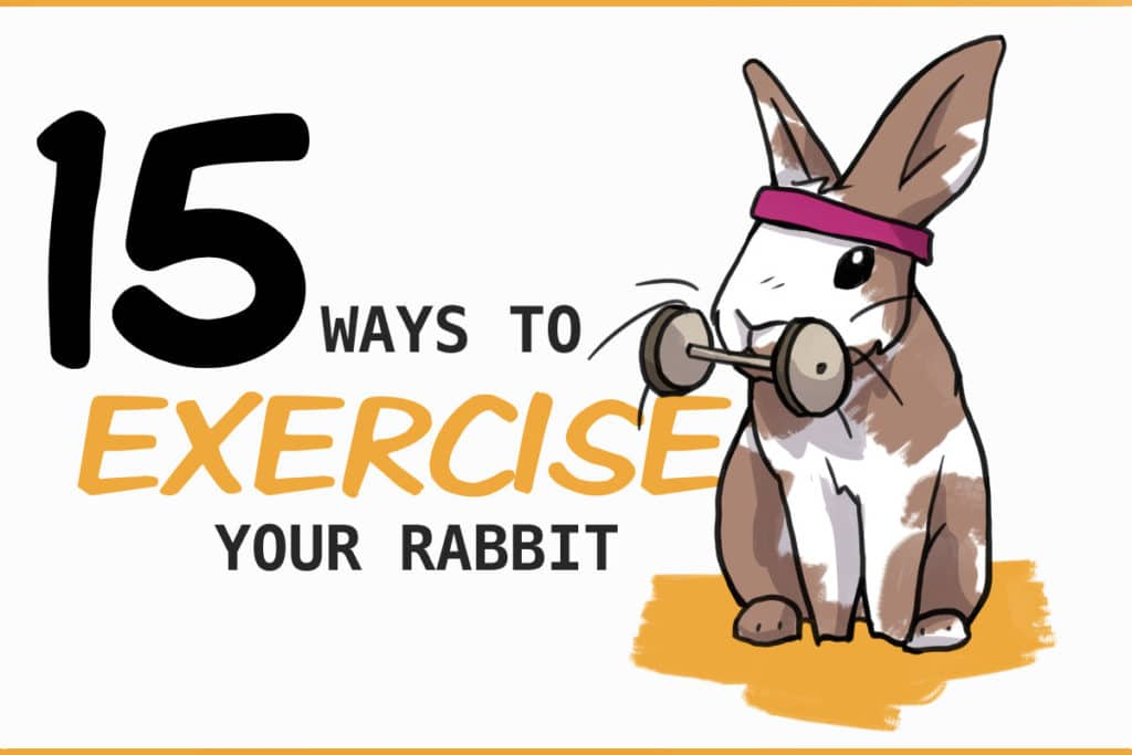 15 ways to exercise your rabbit