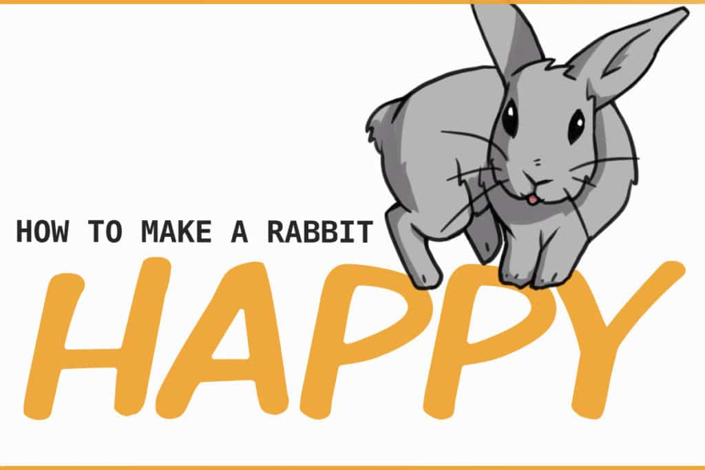 how to make a rabbit happy