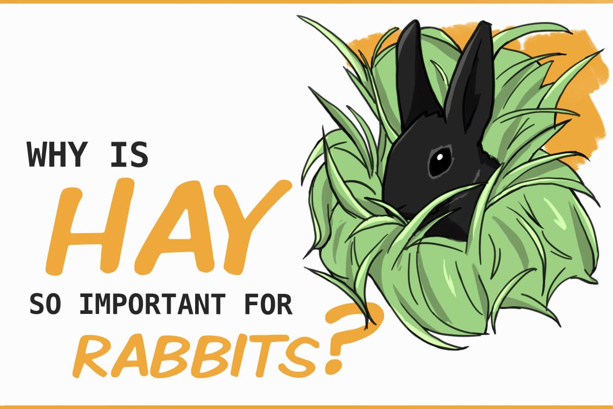 why is hay so important for rabbits?