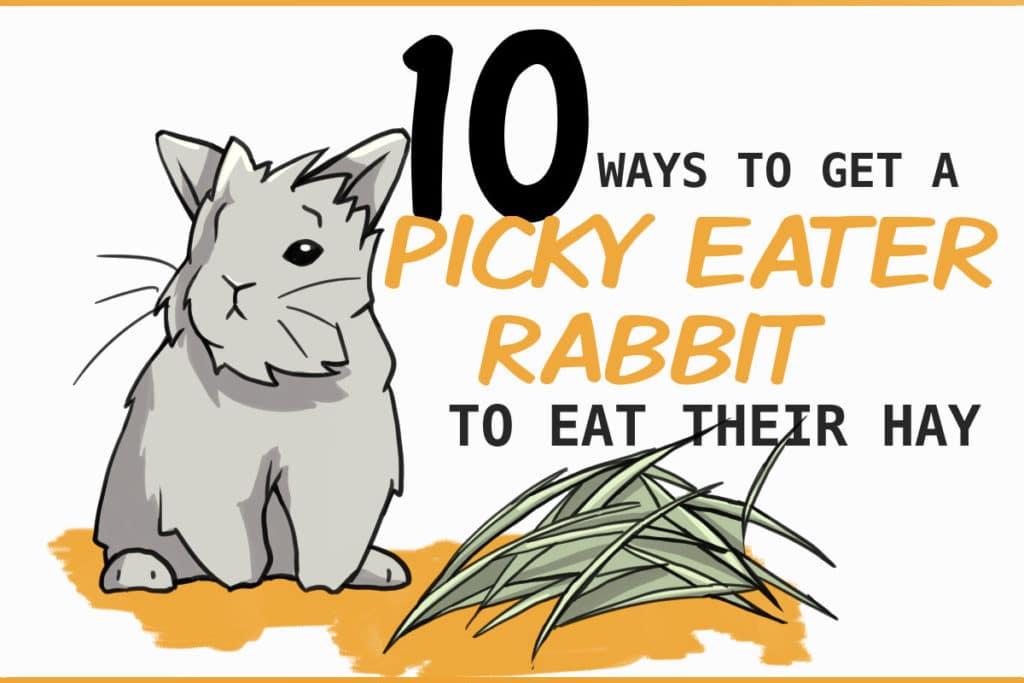 picky eater rabbits
