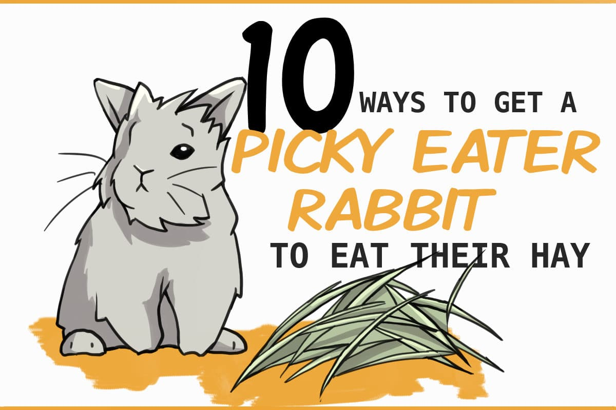 picky eater rabbits