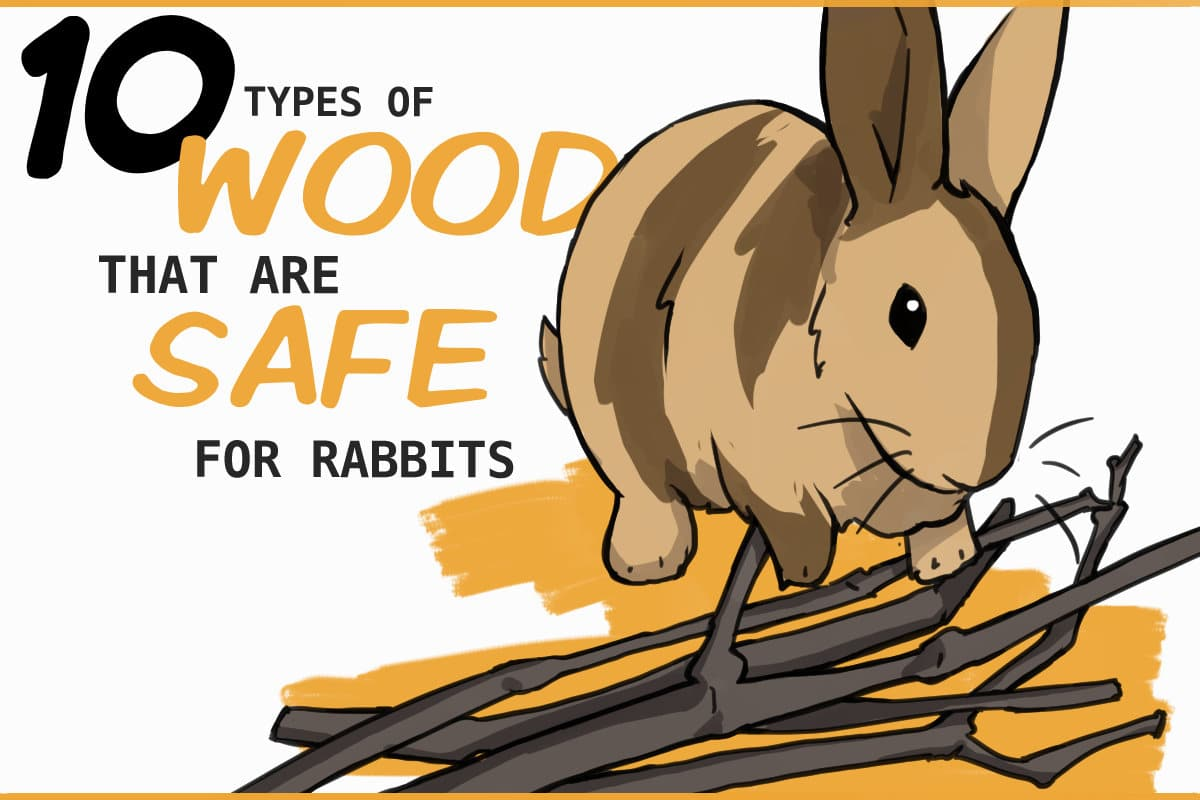 10 types of wood that are safe for rabbits