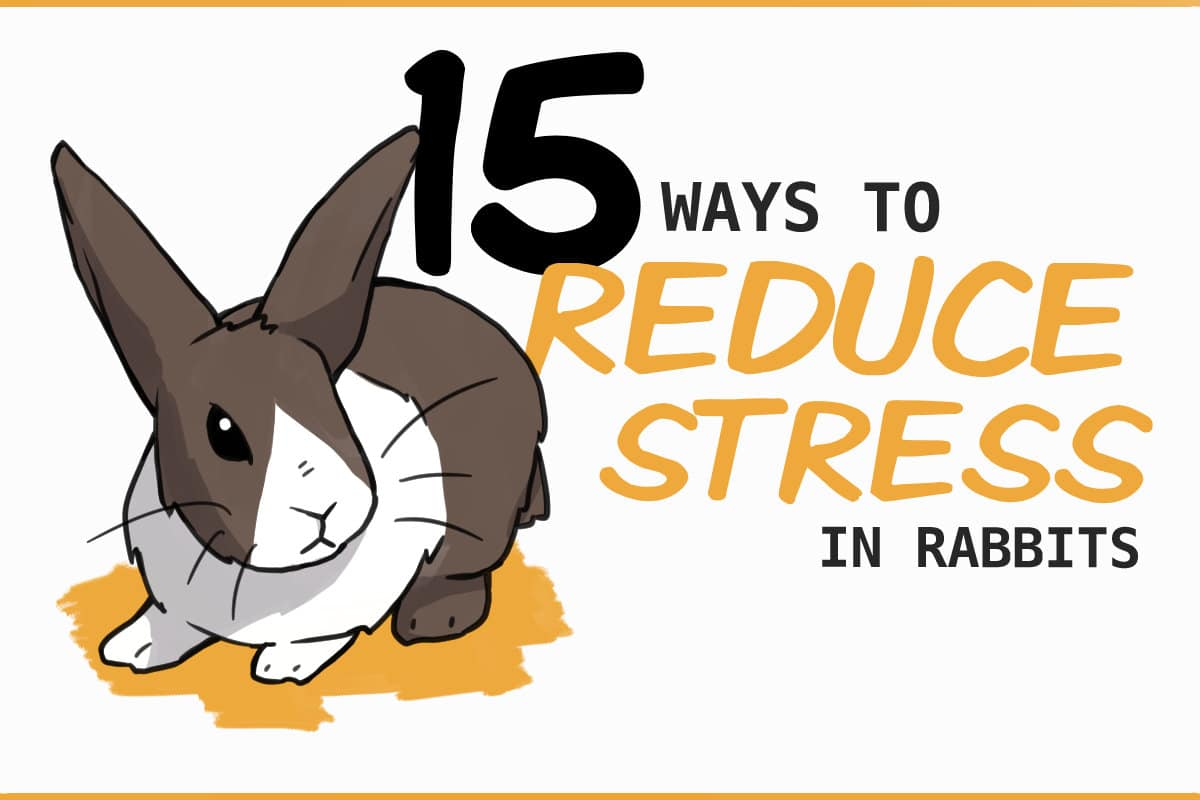 15 ways to reduce stress in rabbits
