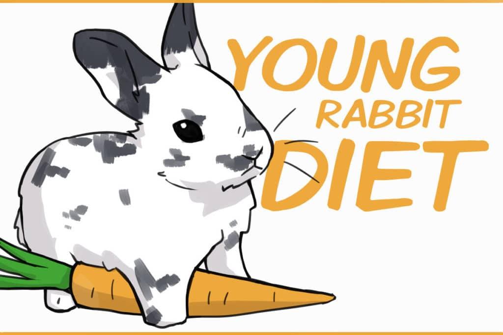 young rabbit diet