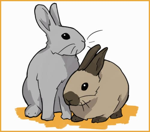 give your rabbit a more confident friend