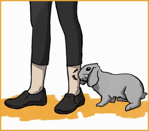 rabbit biting a person's leg