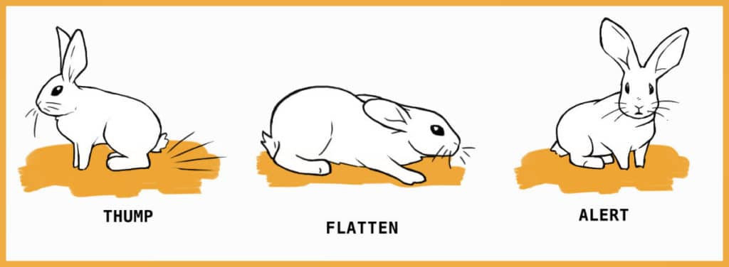 fearful rabbit behaviors