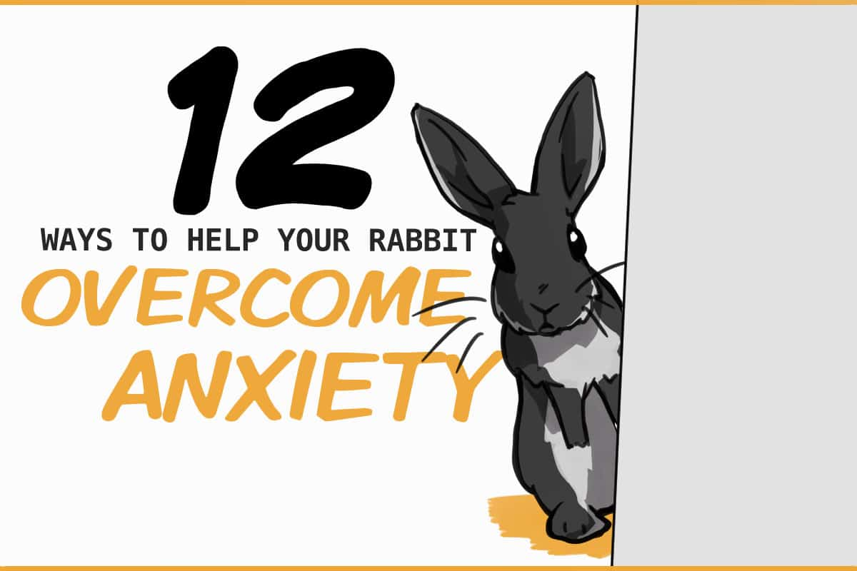 12 ways to help your rabbit overcome anxiety