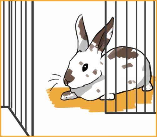 rabbit won't leave enclosure