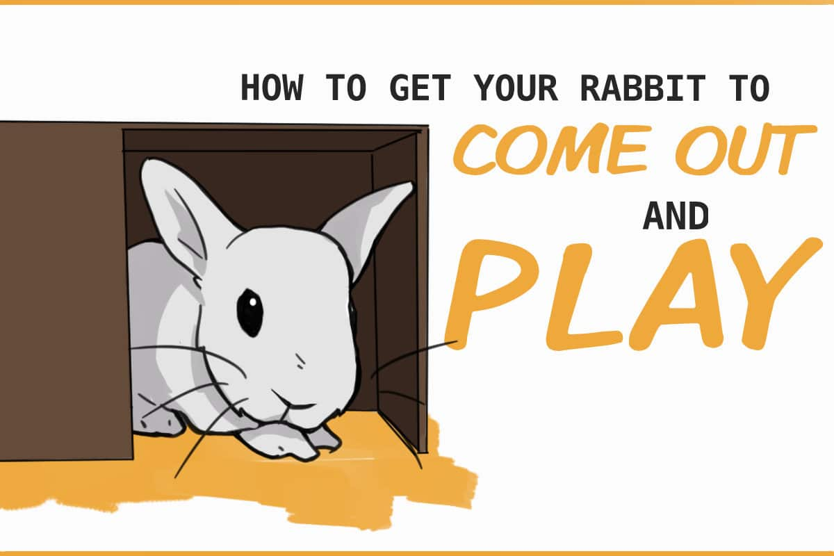 how to get your rabbit to come out and play