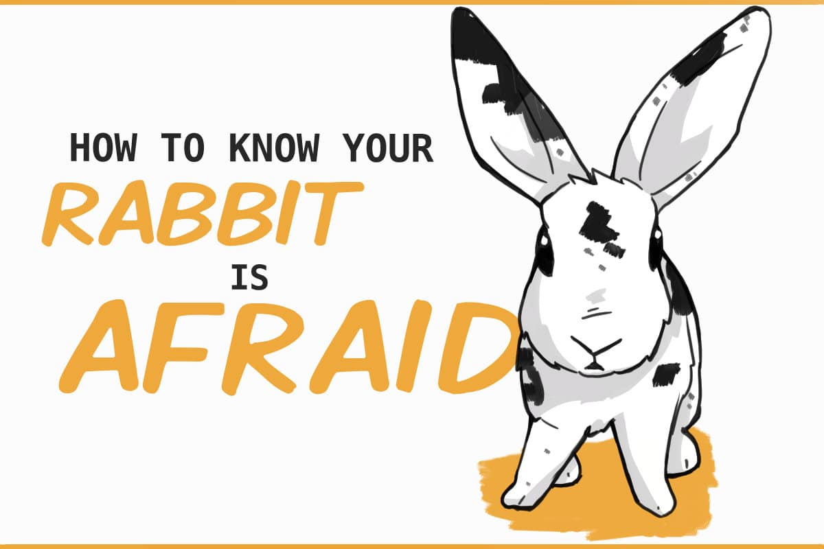 how to know your rabbit is afraid