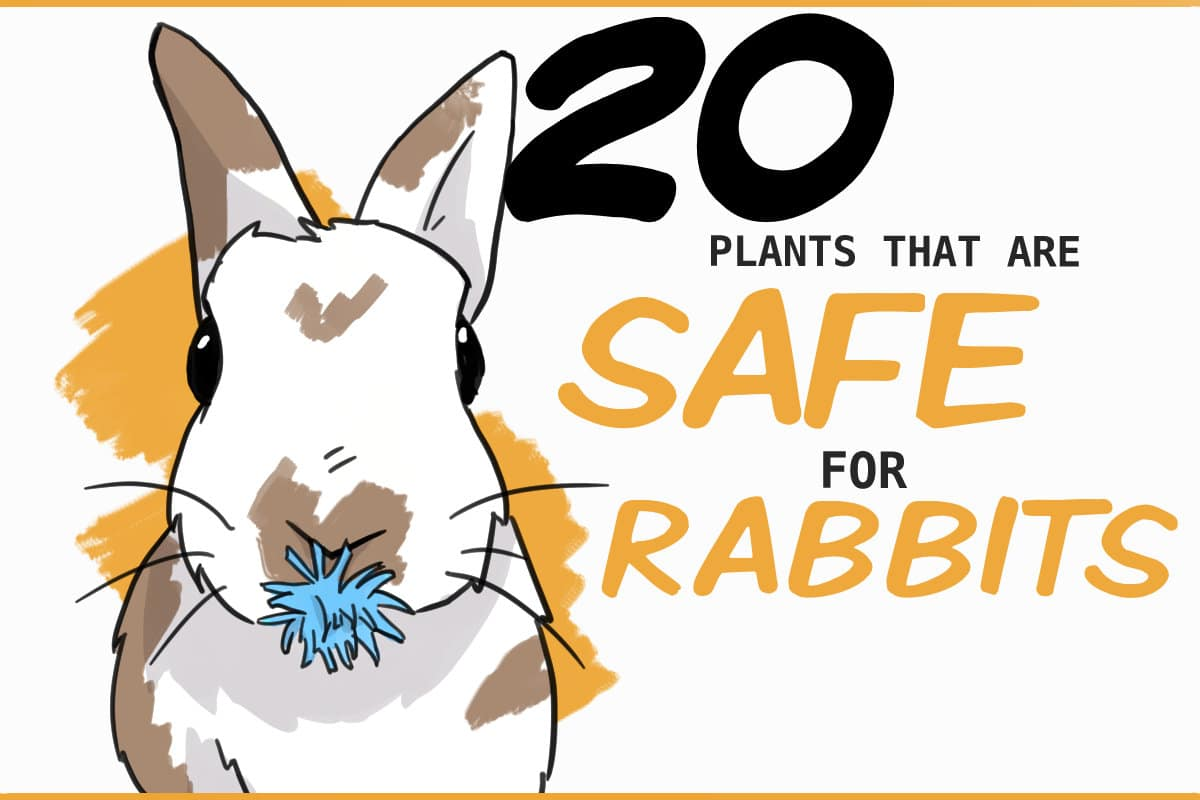 20 plants that are safe for rabbits