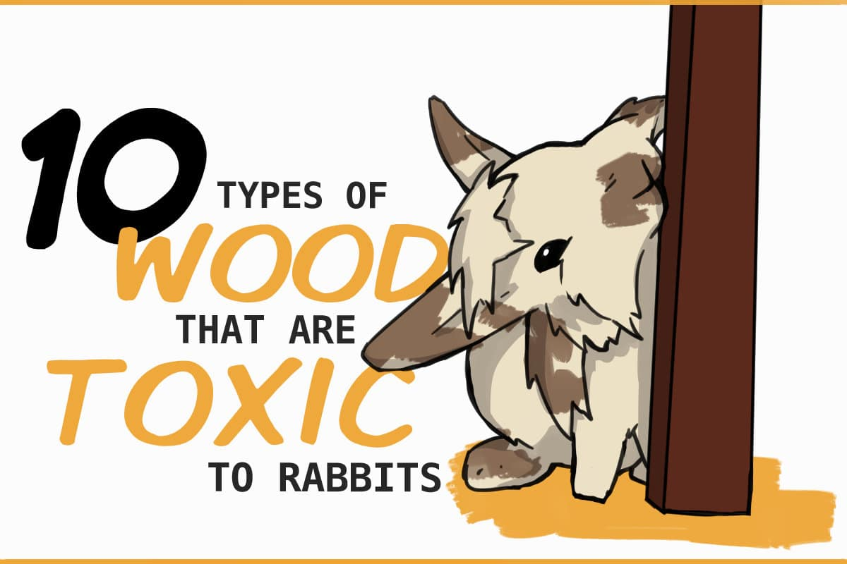 20 Types of Wood that are Poisonous for Rabbits
