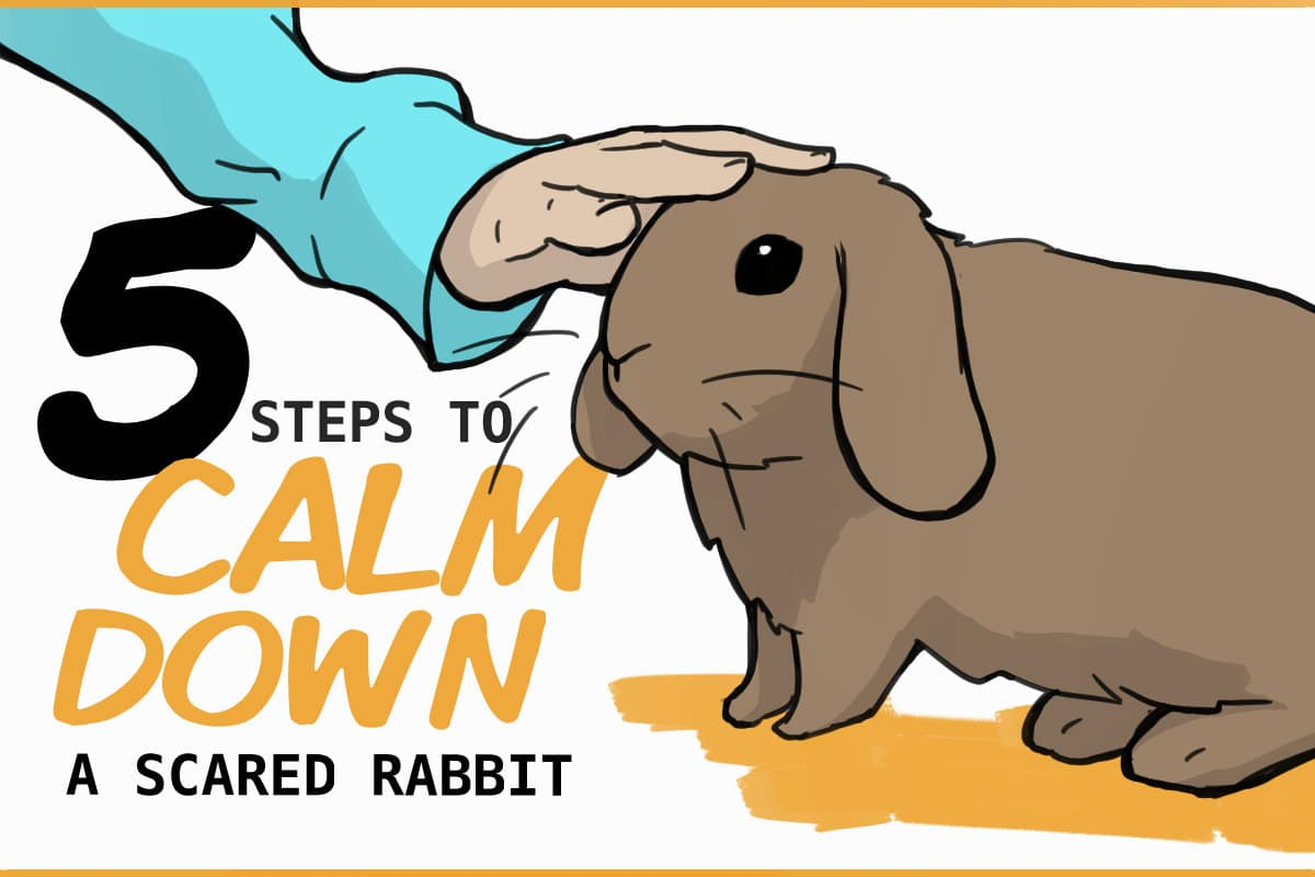 5 steps to calm down a scared rabbit