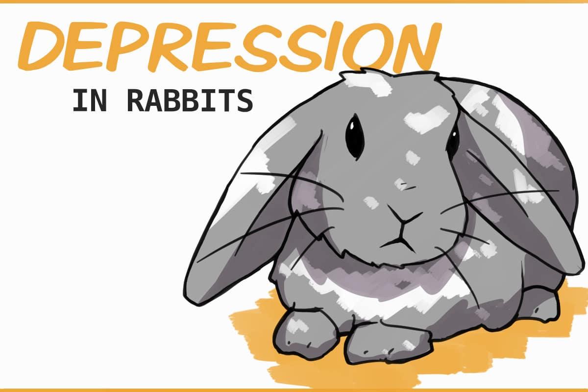 depression in rabbits