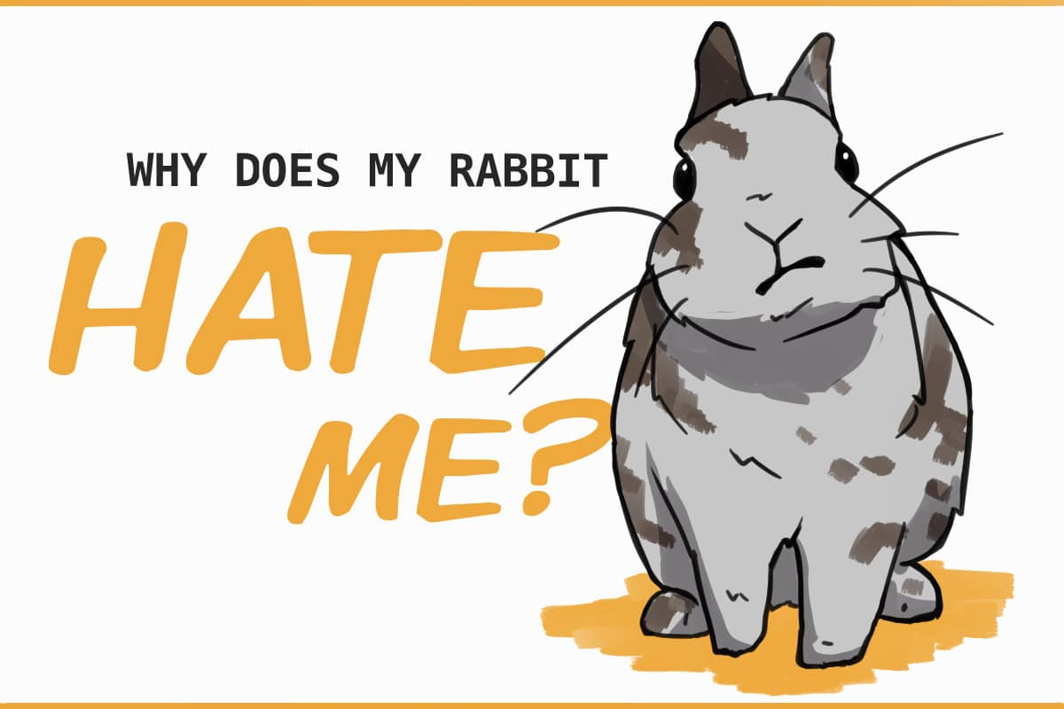 WHY DOES MY RABBIT HATE ME?