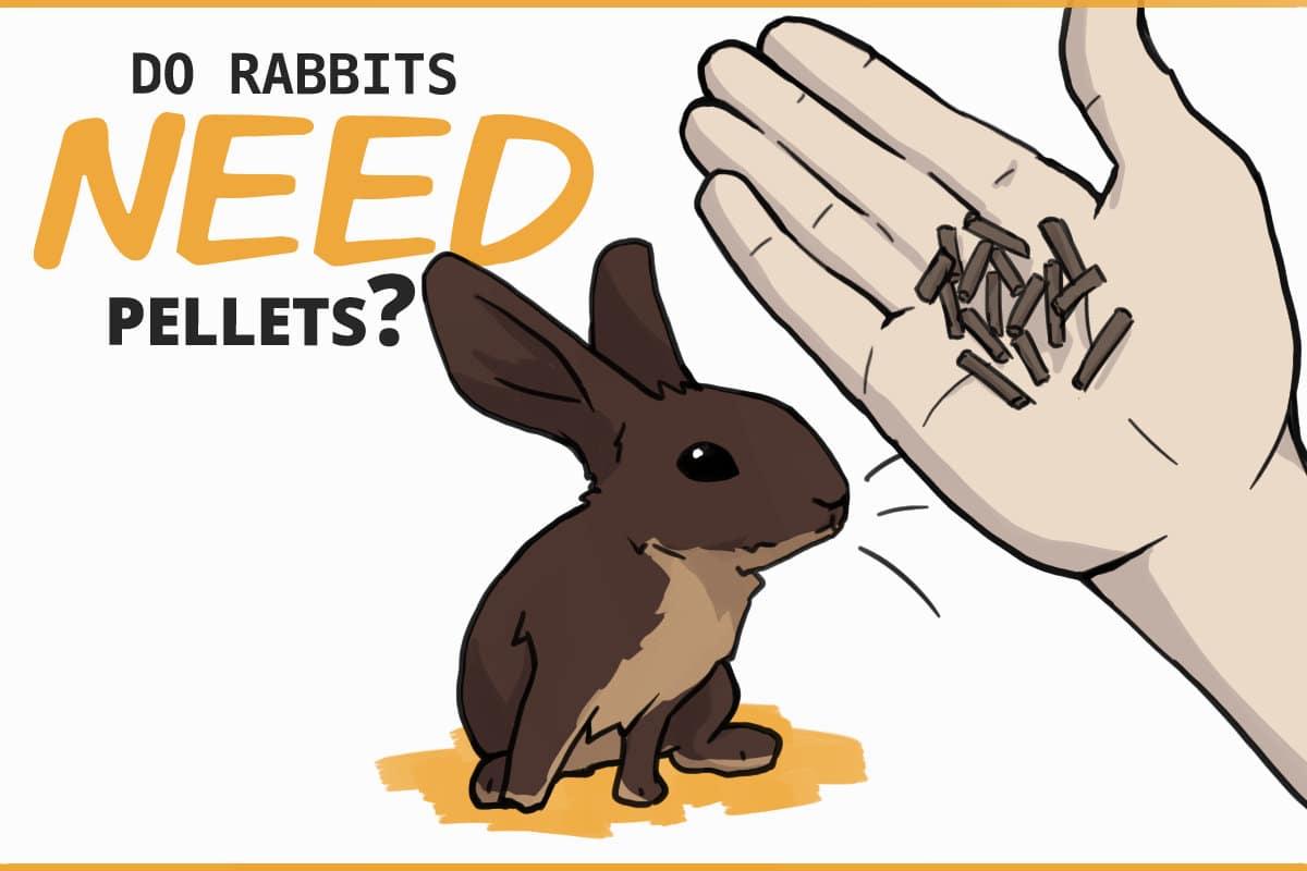 Do rabbits need pellets?